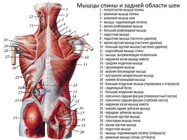az izmok a test egyik oldalán fájnak)