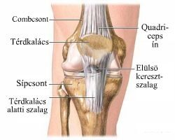 a térdízület oldalsó ragasztásainak törésének kezelése osteoarthritis arthrosis degeneratív ízületi betegségek rheumatoid arthritis
