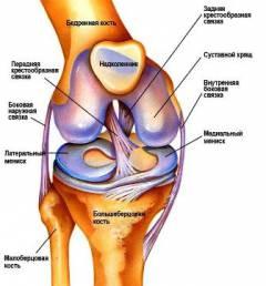 mell osteochondrozis gyógyszeres kezelés térdfájdalom költsége