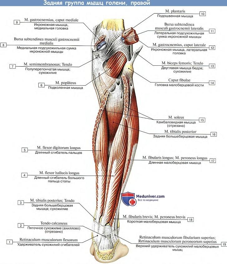 milyen fájdalmat okozhatnak a lábak ízületei