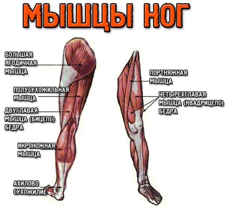 ha a lábak fájnak az ízületekben)