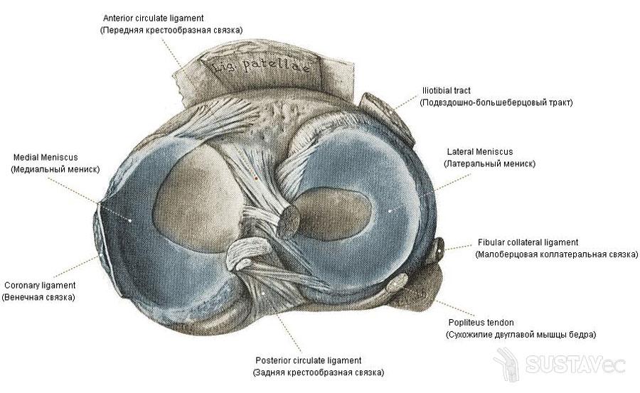 növekedések térdízületen artrózissal nehézség a lábakban, ízületek fájdalma