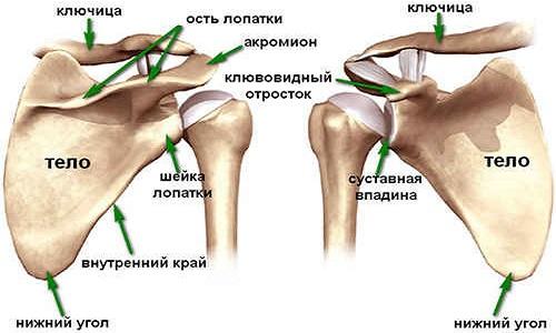 deformáló artrosis az 1. fokozatú kézben