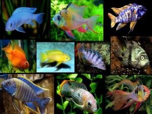 közös kezelés folyami halakkal)