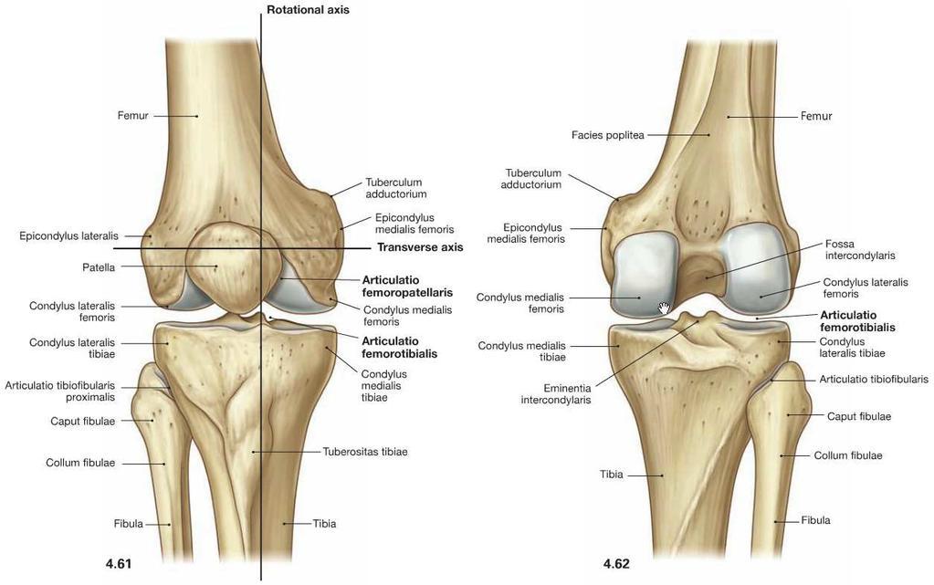 a térdízület külső oldalsó ligamentuma