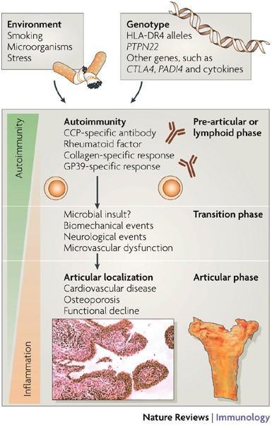 rheumatoid arthritis pathogenesis review nyaki osteochondrozis kenőcsök gélek