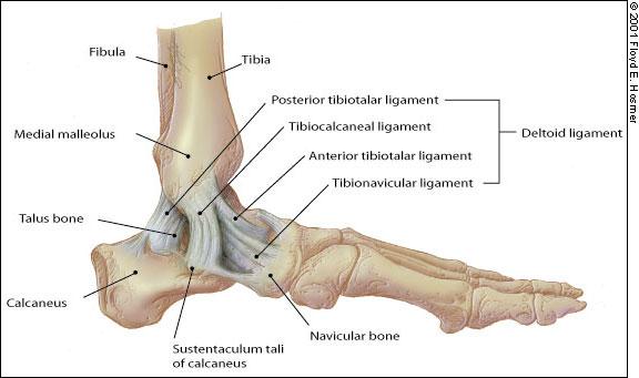 boka ízület ligamentum kezelése