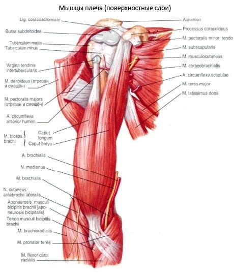 A kéz ízületi gyulladása. A kezdeti szakasz kezek ízületi gyulladása - hogyan kell kezelni