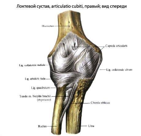 Könyökízület - Koroknai Medical