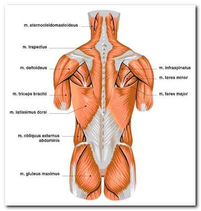 a hát alsó ízületének és izmainak fájdalma)