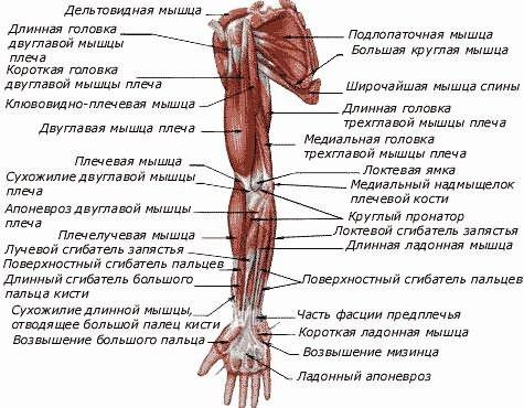 a vállízület periartritisz kezelése kenőcsökkel)
