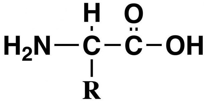 aminosavak a kötőszövet helyreállításához
