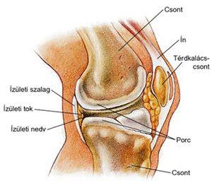 a térd artrózisa nincs folyadék égő fájdalom a csípőízületben