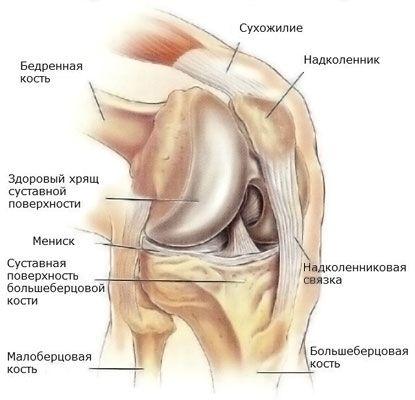 a térd deformáló artrózisának fórumkezelése)