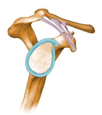 az ízületi csontok megsérítik az alsó hátat