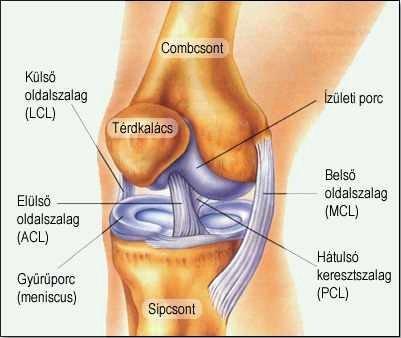 kezdő fájdalom a csípőben járás közben a vállízület osteochondrosis fájdalma okozza