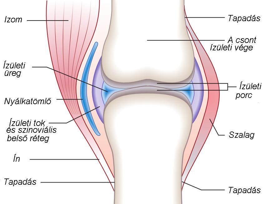 a csontokat összekötő szalagok károsodását hívják