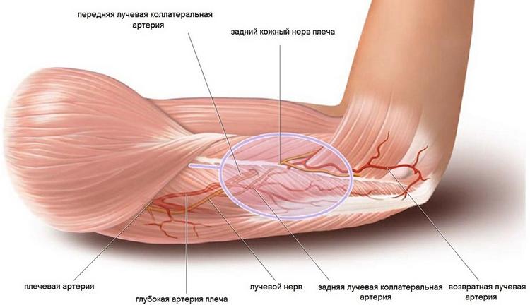 a könyökízület neuritisének kezelésére a térdízület belső ligamentumának sprainje