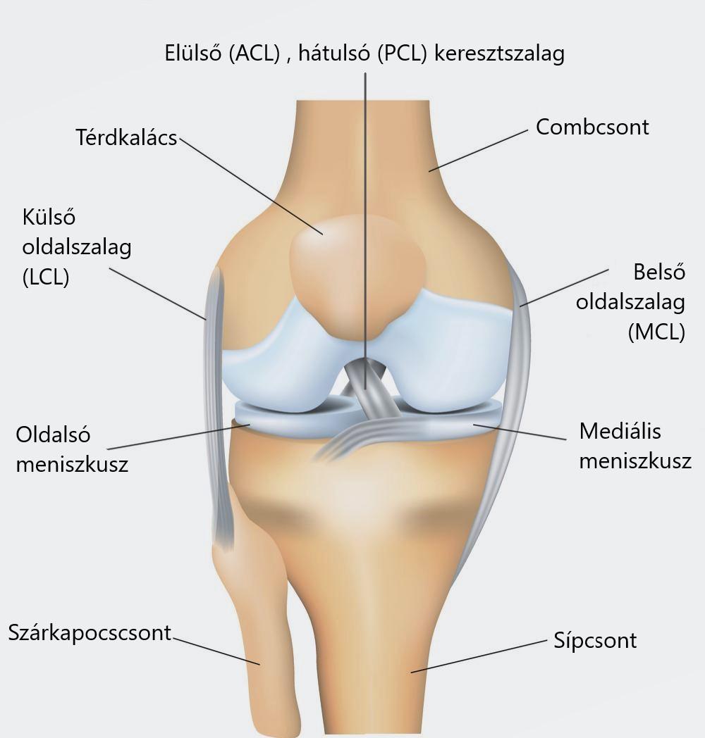 a térd meniszkuszának károsodásának mértéke akut fájdalom a jobb térdízületben