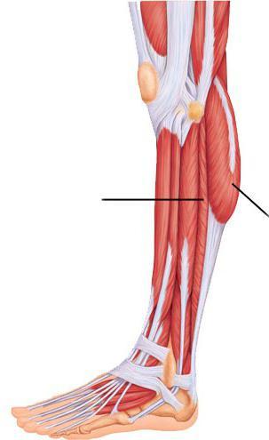 a térdízület külső oldalsó ligamentuma ízületi fájdalom a futópadon