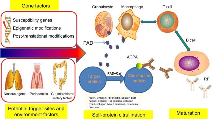 Pharmacogenetics and pharmacogenomics in rheumatology | SpringerLink