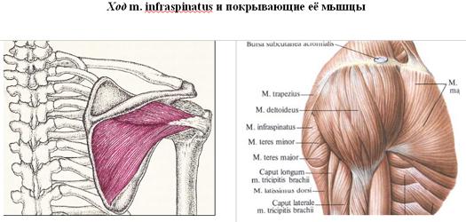 akivel kapcsolatba kell lépni a térd artrózisával
