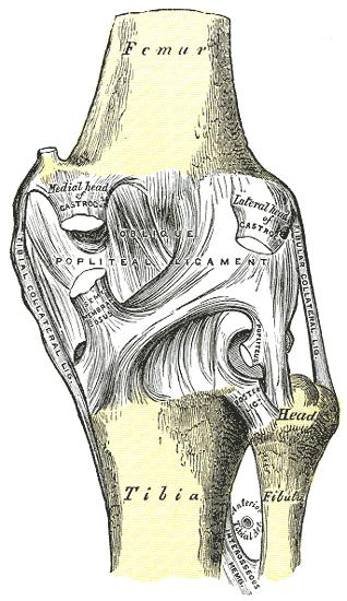 térdízület 3. fokú csontritkulása ha a lábak fájnak az ízületekben