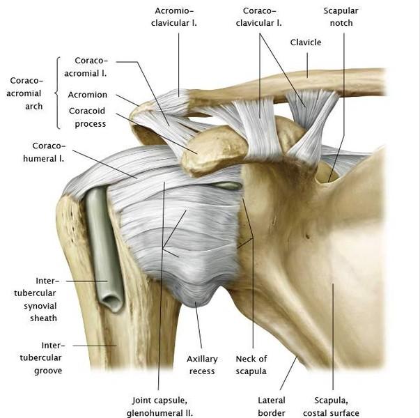 a clavicularis vállízület gyulladása)