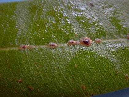 fa tetvek ízületi kezelés