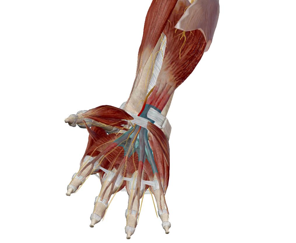 Kéztörés gyógyulásának segítése lökéshullám kezeléssel