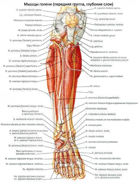 miért a lábak ízületei