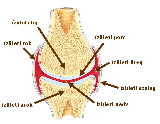Egy csomó a gerincen a lumbális gerincben - Megelőzés