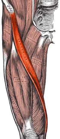 fájdalom a csípőízületben ülőkor ban ben. git kezelése az ujjak artrózisa