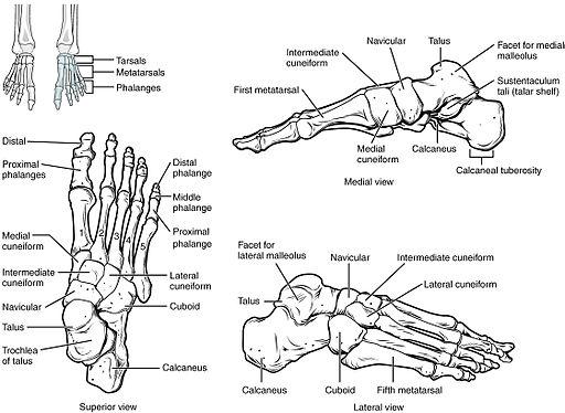 fájdalom és a lábujjak ízületei)