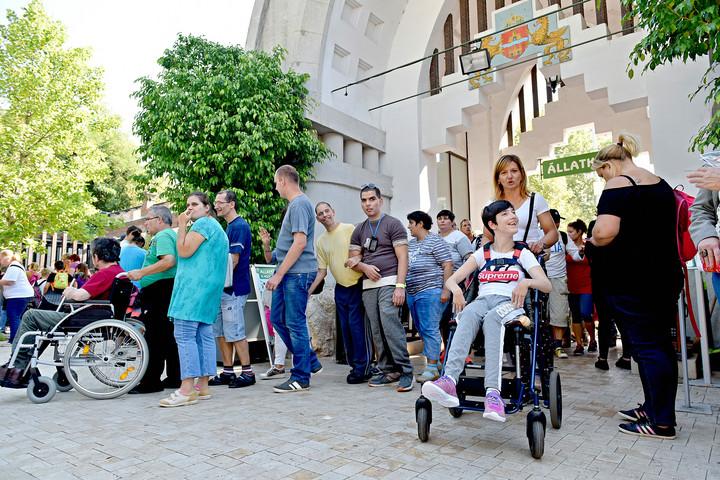 fogyatékkal élők közös kezelése