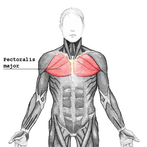 sterno-costalis ízületi fájdalom