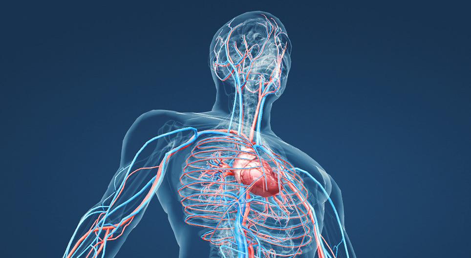 1. Tipp: Hogyan javítható a vérkeringés a fejben?