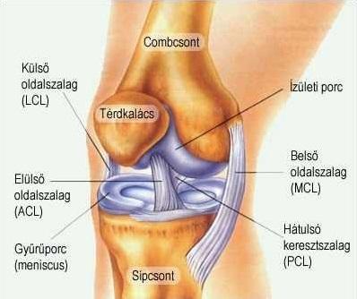 Térdkalács (patella) körüli fájdalom | sebinko.hu – Egészségoldal | sebinko.hu