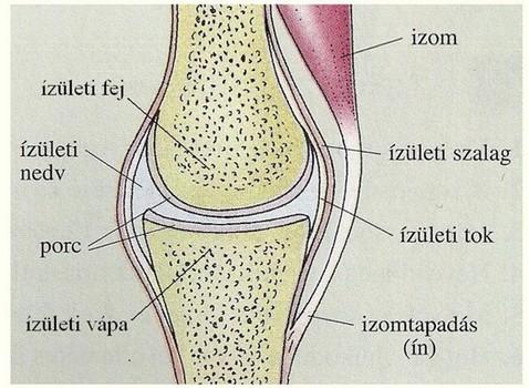 izom-csontrendszer és ízületek betegségeinek tünetei)
