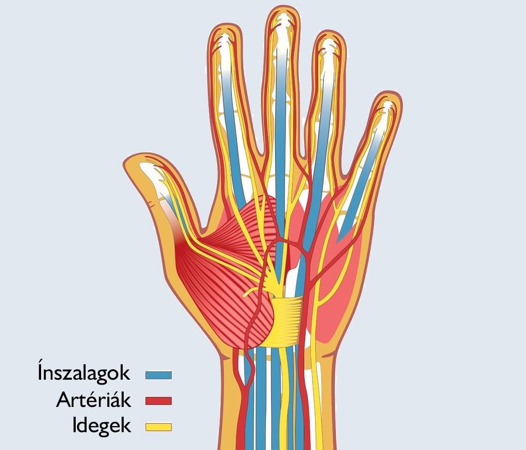a kéz ízületei megsérültek a hidegtől