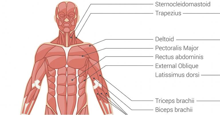 vállízület fájdalom komplex gyakorlat