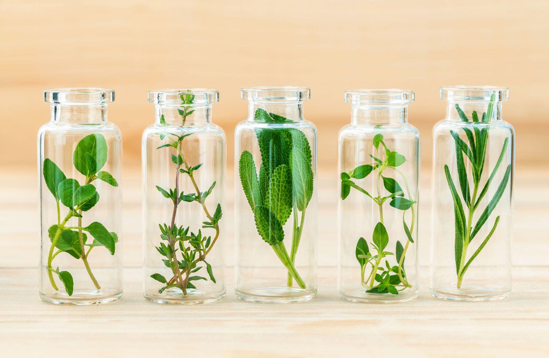 milyen gyógynövények az ízületi gyulladásokra