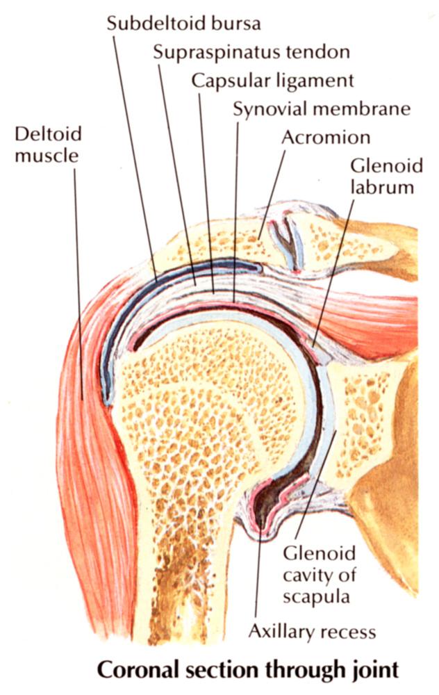 vállízület krónikus ízületi gyulladása