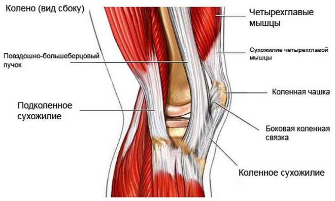 helyreállítási idő a térdízület ligamentumainak törése után)