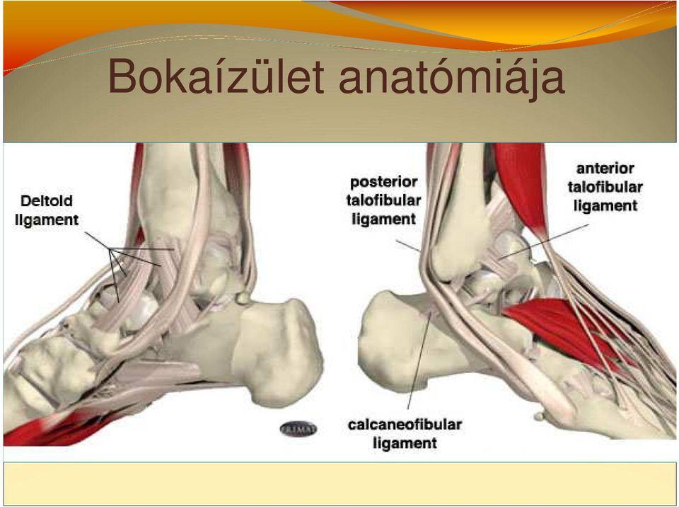 boka ligamentum-töréskezelés)