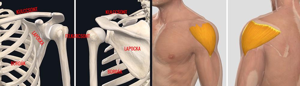 tünetek ízületi fájdalom könyökízület coxarthrosis kezelése