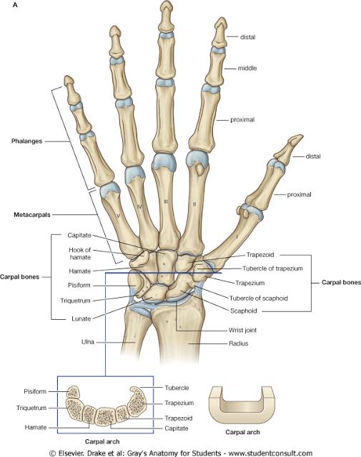 carpal artrosis