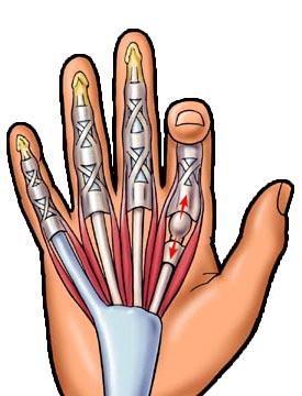 a kéz interfalangális ízületeinek sérülései
