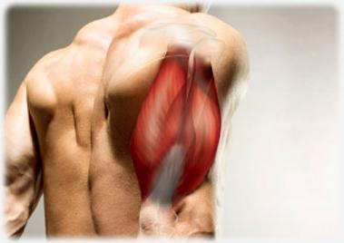 testépítő fájdalom a könyökízületben